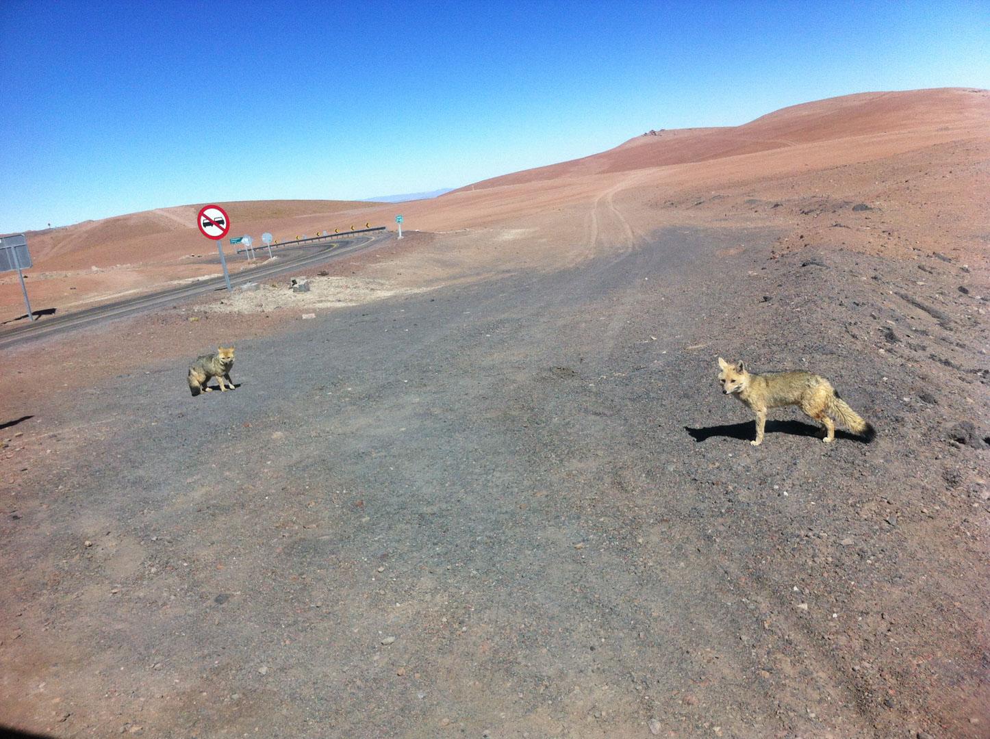 Atacama e Salar Uyuni 6