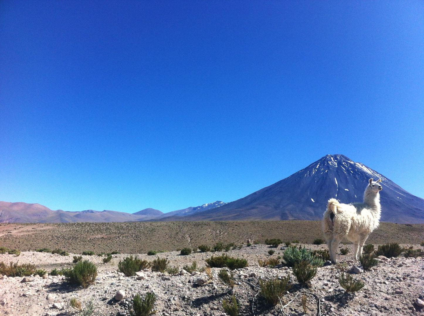 O deserto e a beleza que balança 6