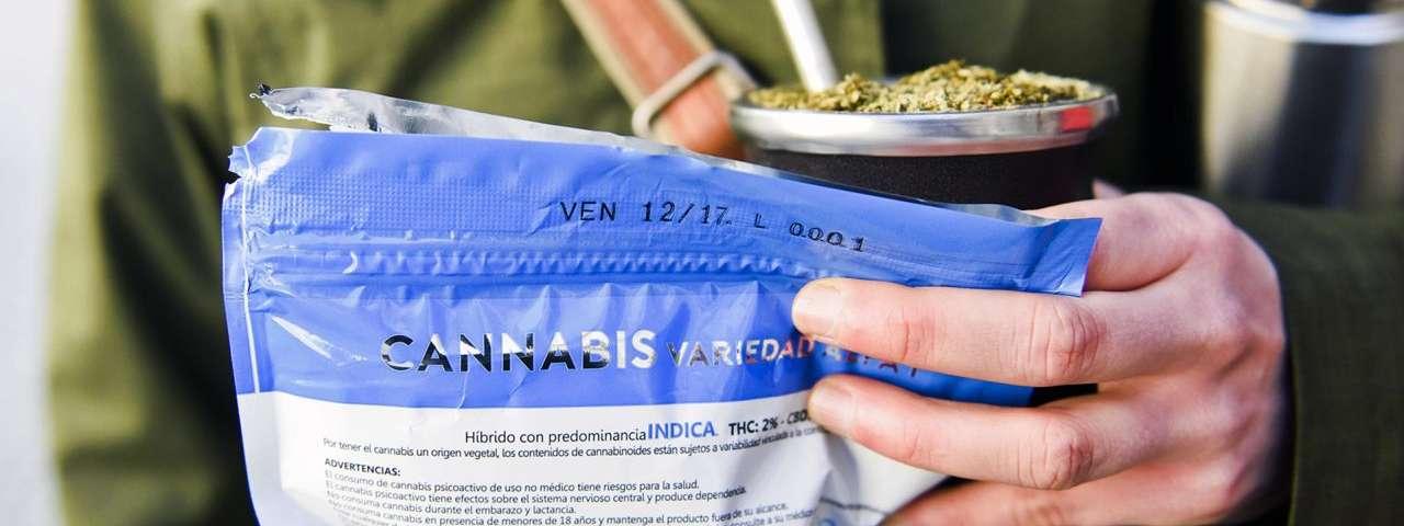 Cinco anos de legalização da maconha no Uruguai